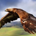 bird-of-prey-amazing